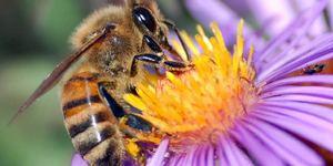 Пчелиное подмора