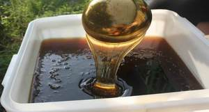 Душистый горный мед
