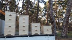 Разновидности пчелиных ульев