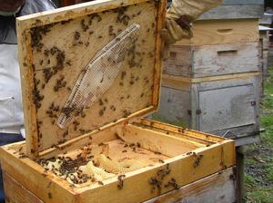 Рамки для пчел своими руками - особенности конструкции